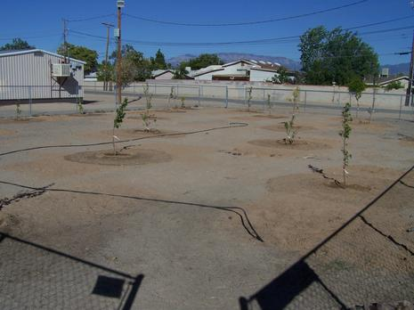 Our newly planted orchard!